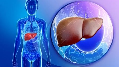 Liver anatomy and function | Doctor-Patient Communication